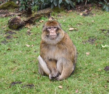 Family Day Out – Monkey Forest, Trentham Gardens, Staffordshire
