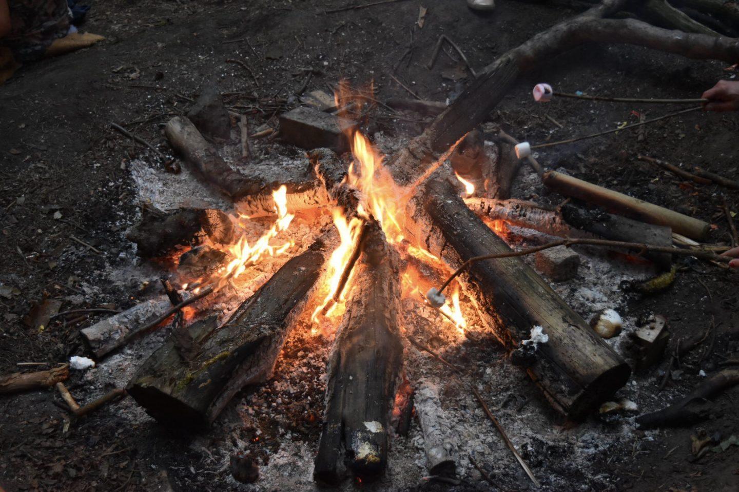 Toasting marshmallows at the Just So Festival with campfire stories