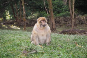 Tips for visiting Trentham Monkey Forest